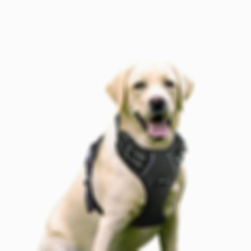 Soft No-Pull Reflective Breathable Adjustable Dog Harness